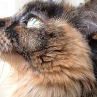 Kedilerin Karakteristik Özellikleri