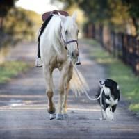 Köpek Eğitiminin Temel Anahtarı Sürü Lideri Olmaktır