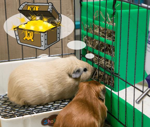 20 best guinea pig hay rack in 2020