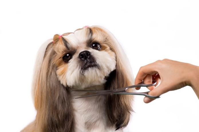 The Best Dog Grooming Scissors of 2021 - Pet Life Today
