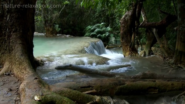Waterfall & Jungle Sounds 4 Relaxing Tropical Rainforest ...