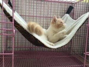Useful Thingy  Cat Hammock