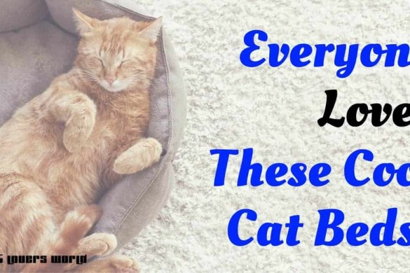 cool-cat-beds