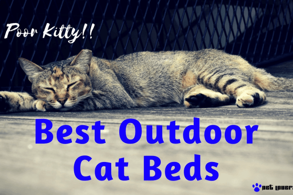 best-outdoor-cat-beds