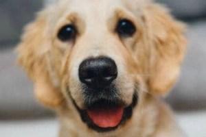 Best Orthopedic Dog Bed Smiling Dog