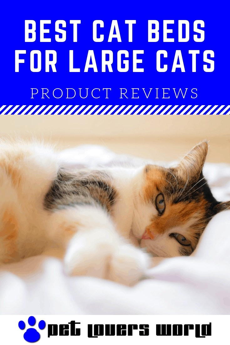 Best Cat Beds For Large Cats ReviewsPinterest Image