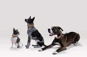 LINK AKC Smart Dog Collar Buyers Guide