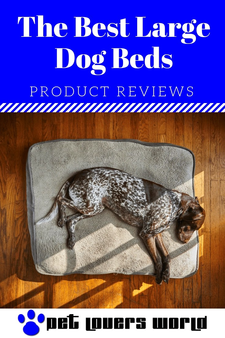Best Bed For Large Dogs Reviews