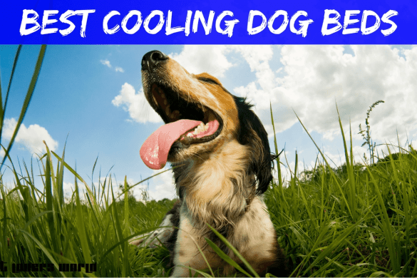 Best Cooling Dog Beds Reviews