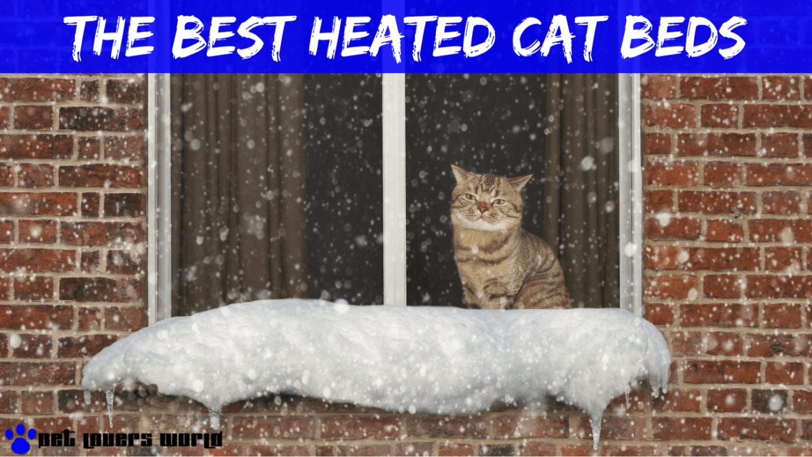 Best Heated Cat Bed Reviews