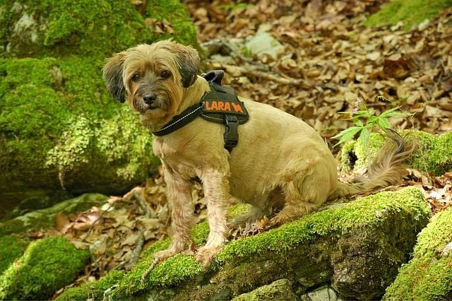 Best Dog Harness Reviews