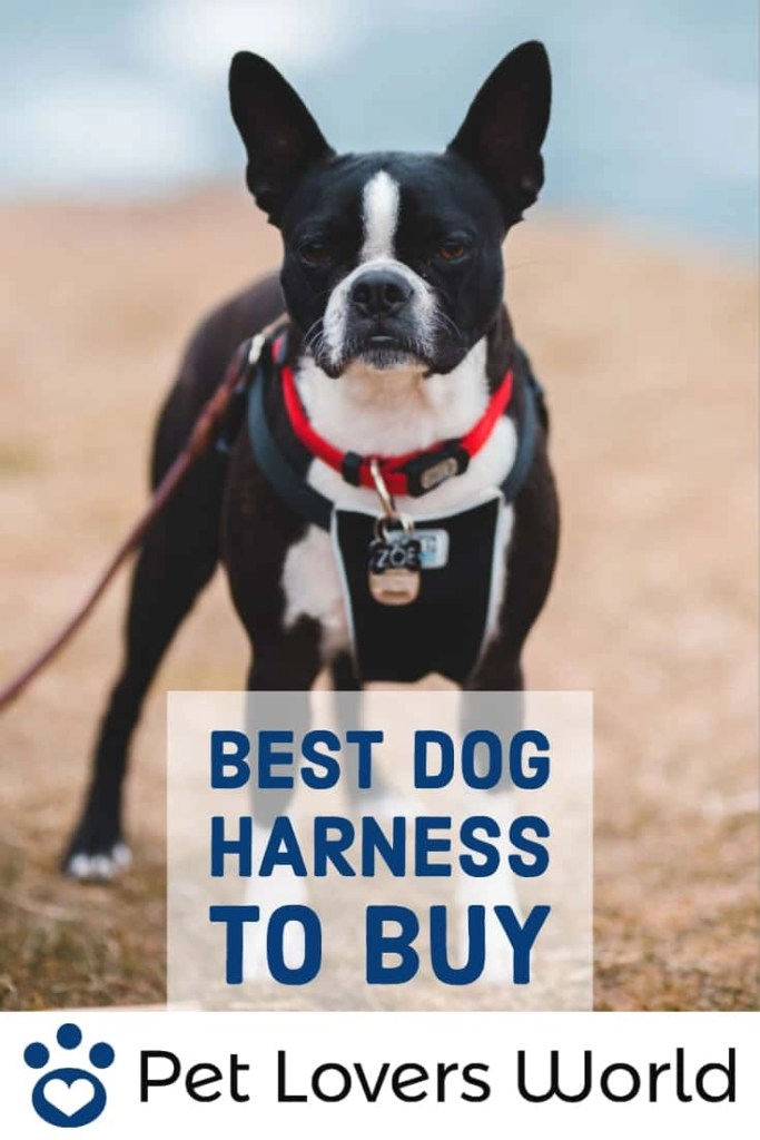 Best Most Comfortable Dog Harness Reviews Pinterest Image