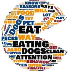 Why Do Dogs Eat Poop Wordcloud
