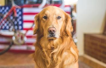 10-best-dog-shampoos-reviews-guide