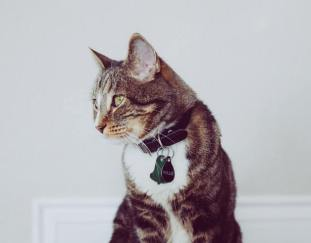 are-cat-collars-safe