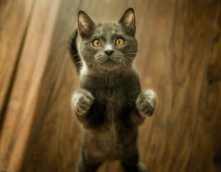 can-cats-get-parvovirus
