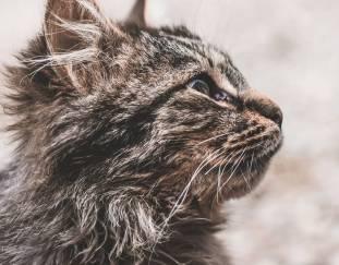 do-cats-eat-catnip