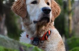 10-best-dog-collars-reviews-guide