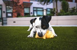 10-best-dog-toys-reviews-guide