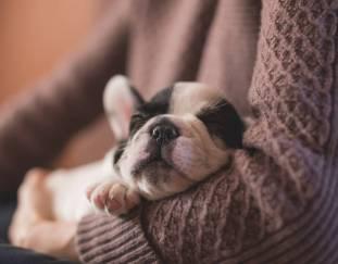 why-do-dogs-sleep-so-much