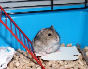 10-best-hamster-cages-reviews-guide
