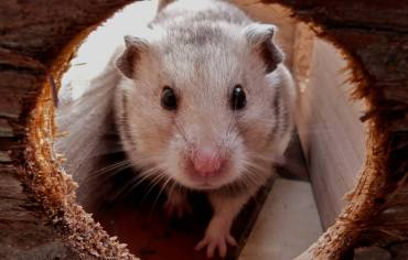 16-best-hamster-toys-reviews-guide