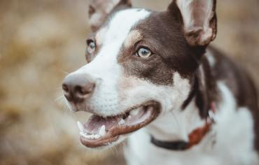 symptoms-of-dog-food-allergies