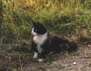 why-do-cats-get-worms