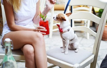 6-reasons-why-do-dogs-sit-or-lay-on-your-feet