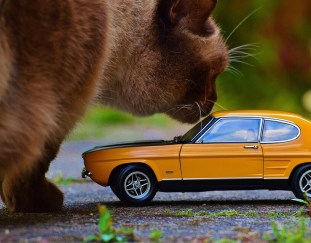 8-tips-how-to-keep-cats-off-your-car