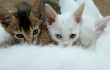 how-many-nipples-do-female-cats-and-male-cats-have