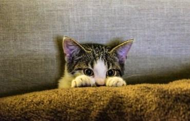how-often-do-cats-poop