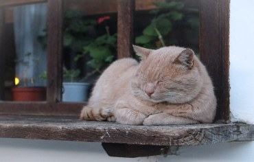 how-to-keep-cats-out-of-houseplants