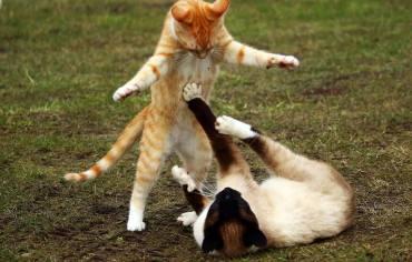 how-to-sedate-a-cat