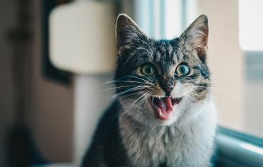 how-to-stop-a-cat-from-biting