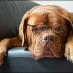 犬や猫の白内障の点眼について
