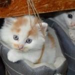 猫のフィラリア予防にはレボリューション