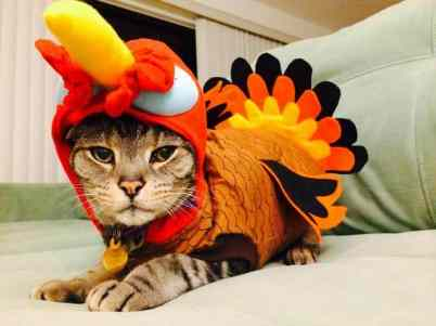 thanksgiving-pets-cat