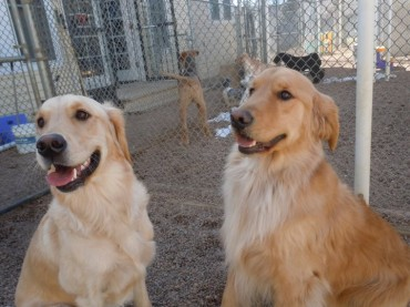 Daycare for Senior Dogs