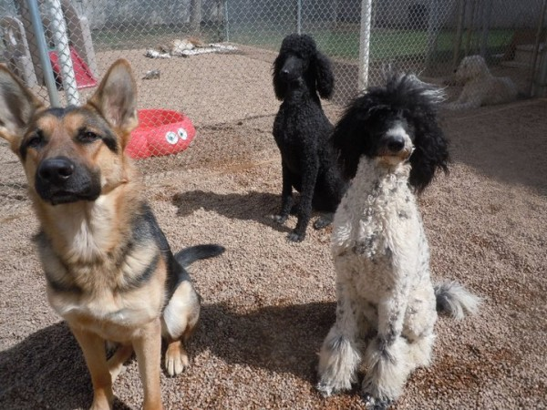 Dog Training and Dog Consultation in Golden and Lakewood