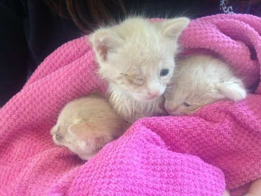 A tiny trio snuggles together in a large, handmade kitty cuddle blanket thanks to Feral To Friendly Cat Rescue, Canada