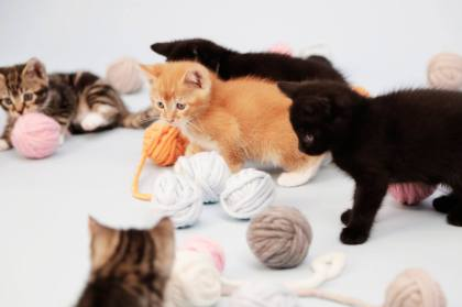 These kittens are having a ball playing at the Knitting Kittens Club monthly meeting. Photo courtesy of Battersea Dogs and Cats Home