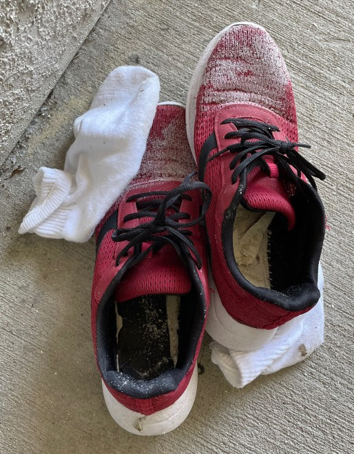 A helpful strategy to find a lost pet is leave out your smelly sneakers