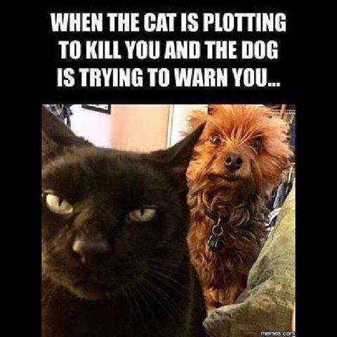 cat-plotting-to-kill-me-meme-dog