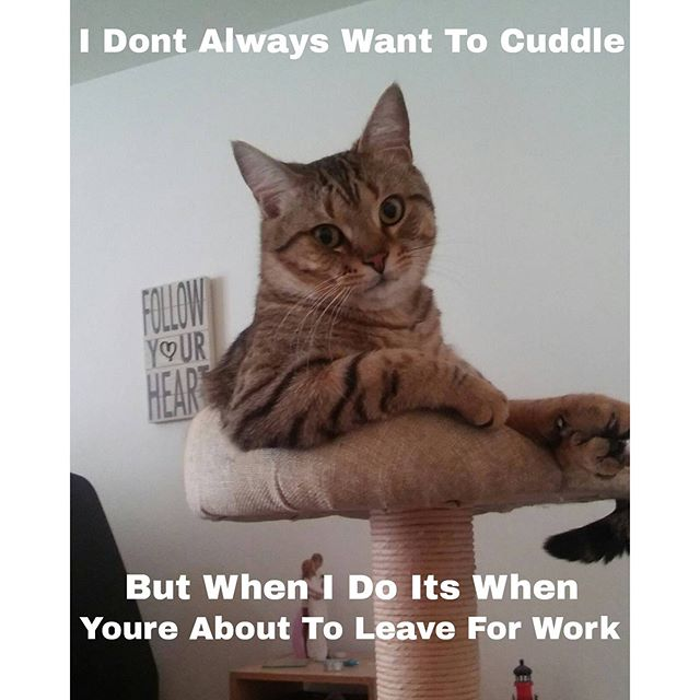 cat-wants-to-cuddle-leave-work-dos-equis-guy-memes