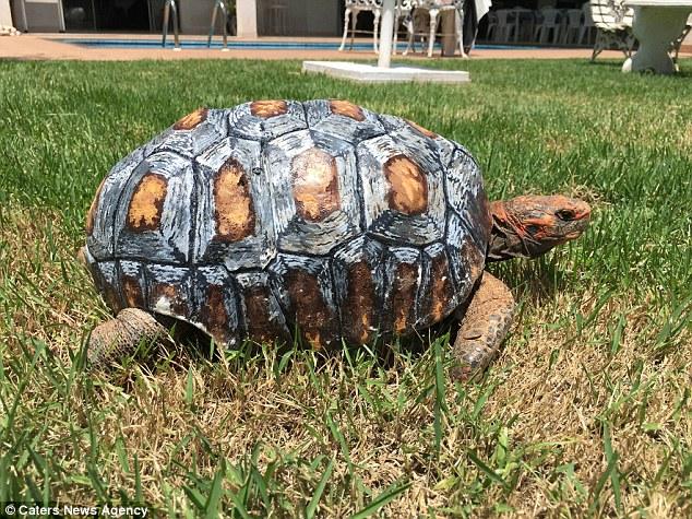 Freddy 3d turtle final shell