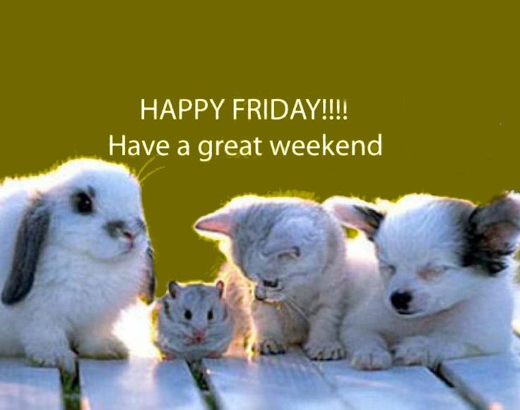 Friday meme 5.6.16?fit=736%2C580 happy friday funny animal video! pet personalities