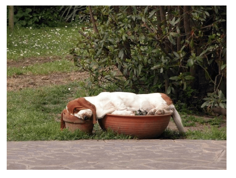 Your pet is so comfortable they sleep anywhere