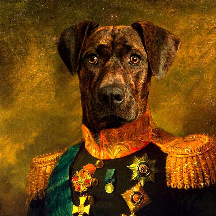 Regal dog portrait in uniform