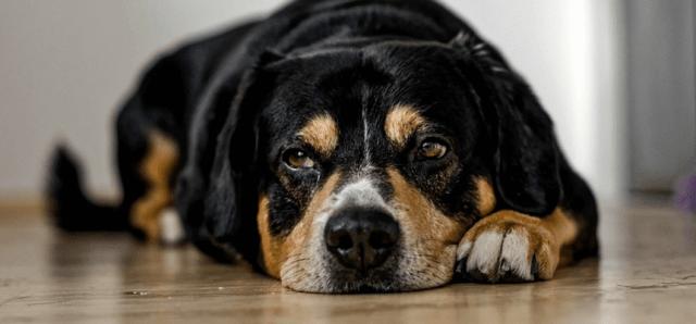 犬がよだれを出す原因。温度調節やストレスが理由かも